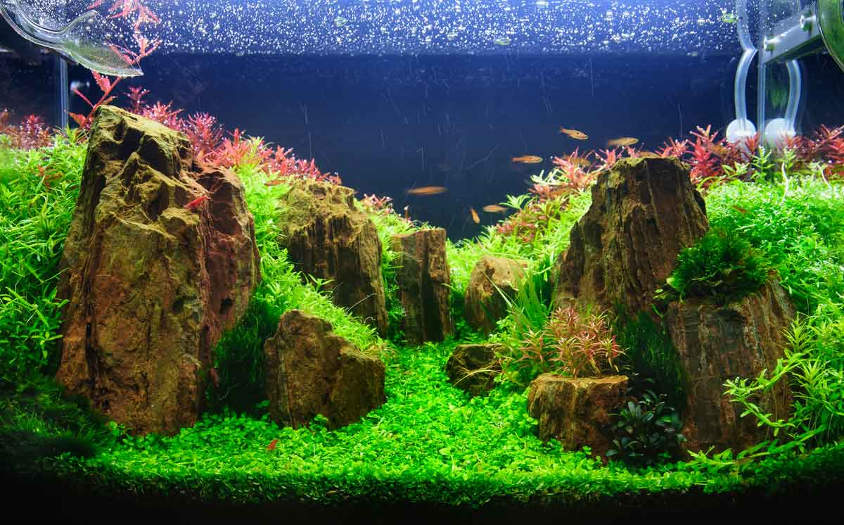 A Guide To Aquascaping And Choosing The Right Aquarium Plants By Nt Labs