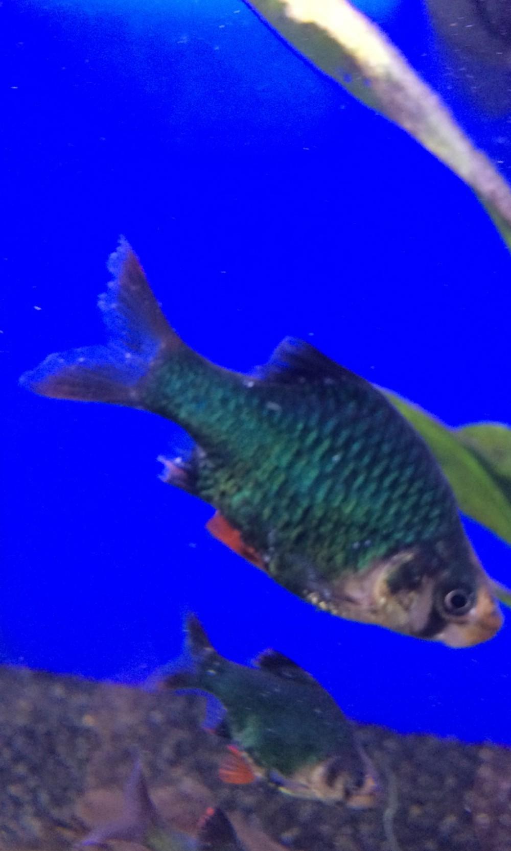 Fish aquarium white spots -  White Spot Fin Rot