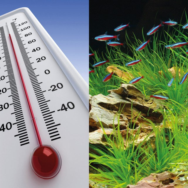 How to keep your water temperature cool in hot weather