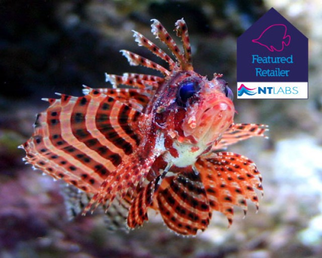 Turkeyfish