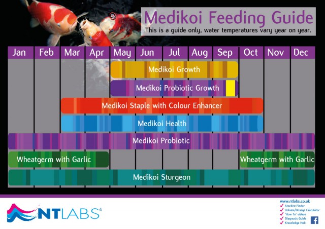 Medikoi feeding guide
